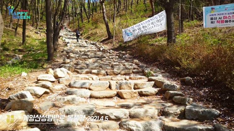 계양산성탐방로 봄풍경 [기록영상]