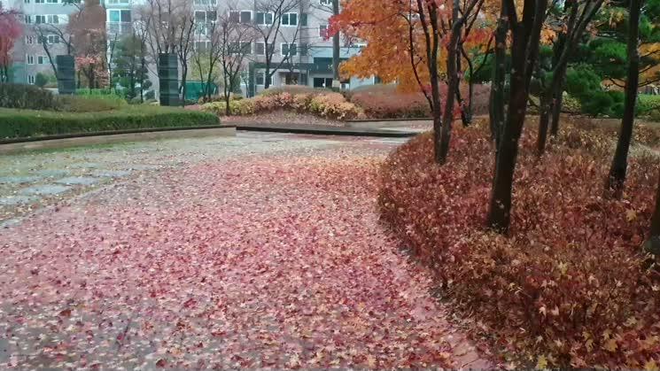 비오는 가을