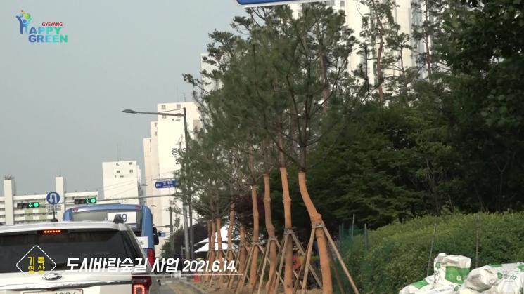 도시바람숲길 [기록영상]