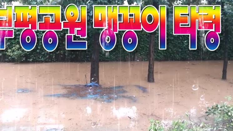 부평공원 맹꽁이 타령...맹이여 꽁이여 ~~~