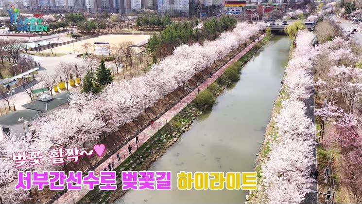 서부간선수로 벚꽃길 하이라이트