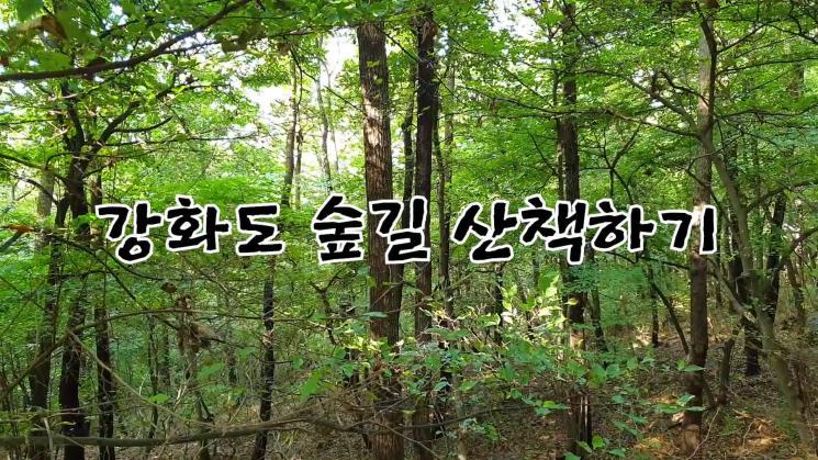 강화도 숲길 산책하기