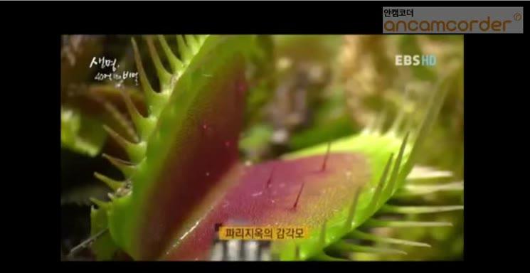 식충식물의 비밀
