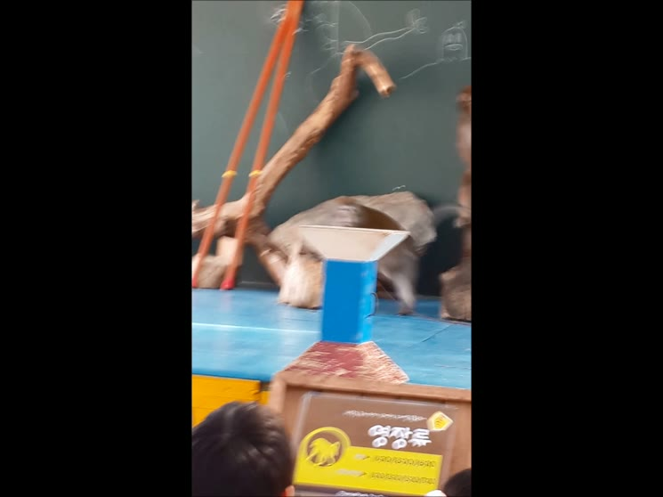 주주 동물원 원숭이쇼