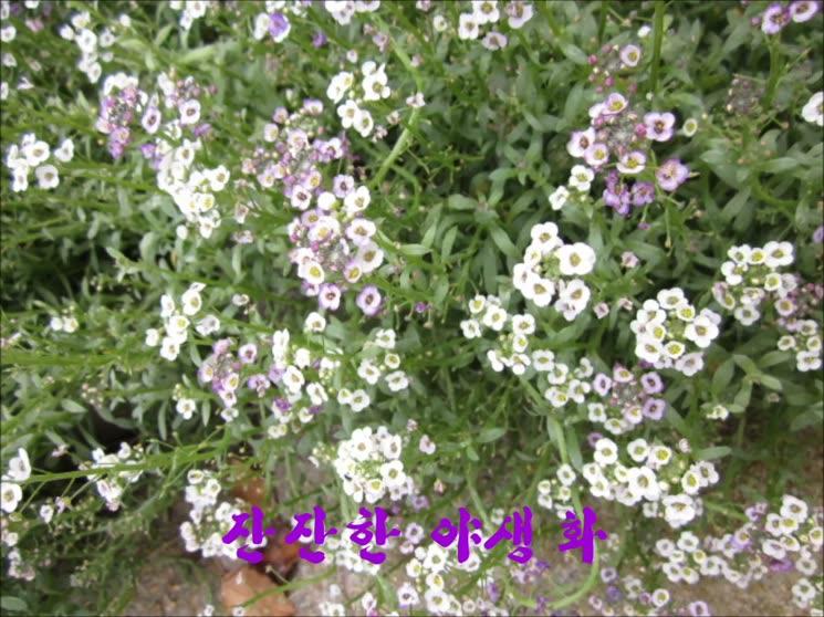 장미의 정원