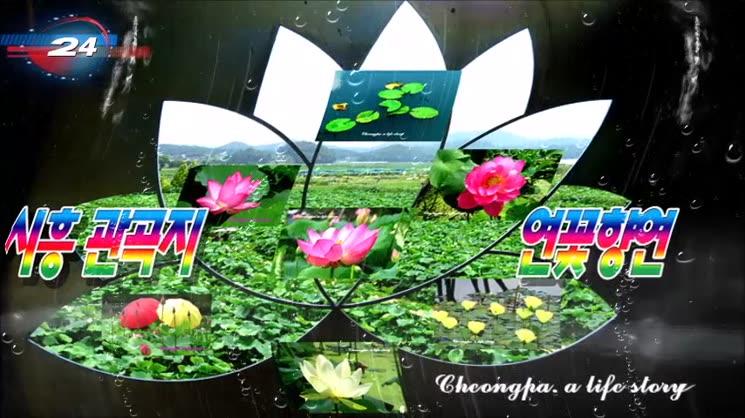시흥 관곡지(官谷池) 연꽃 향연을 찾아서