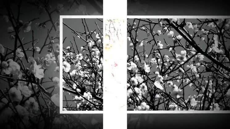 매화꽃이피는 봄이오고있습니다