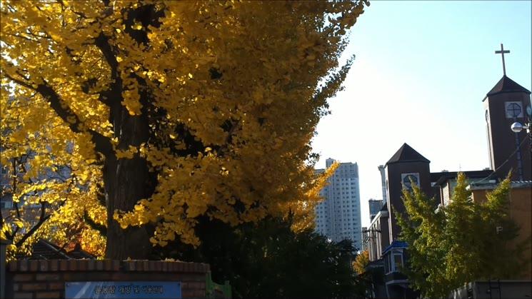 노란 꽃비가 내리던 날